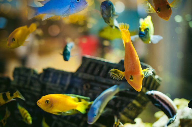 aquariums and fish tanks
